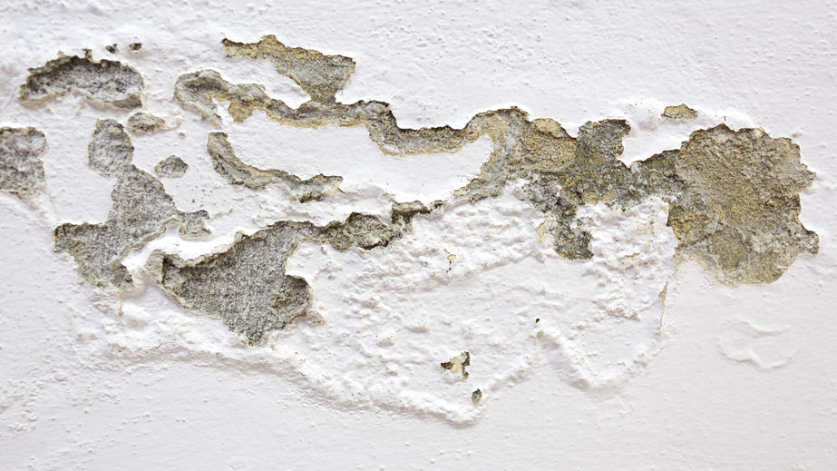 54300089 - mold on the wall