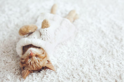 46058077 - cute little ginger kitten wearing warm knitted sweater is sleeping on the white carpet